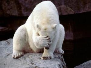 polar-bear-face-palm-thumbnail